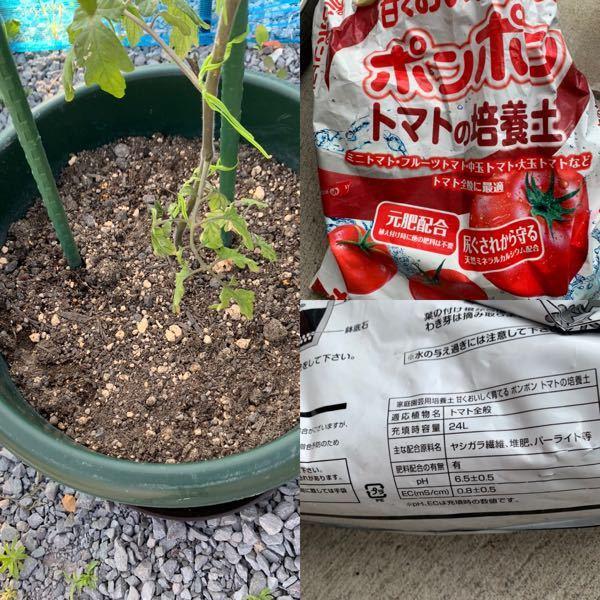ミニトマトをプランターで育てています。トマト用の土を使ったのですが、水はけが良すぎるのか、朝たっぷり底から出るほどの水を与えてもお昼過ぎにはカラッカラに乾いています。他の方の投稿を見ると赤玉土を上に乗 せるといいとありましたが、そこそこの量を今の土の上に追加すれば良いのでしょうか? それともサラッとでいいのでしょうか? 他には何か方法はありますか?赤玉土は一応今日買ってきました。 使用した土と、プランターの土の様子の写真です。 どなたかご教示お願いします。