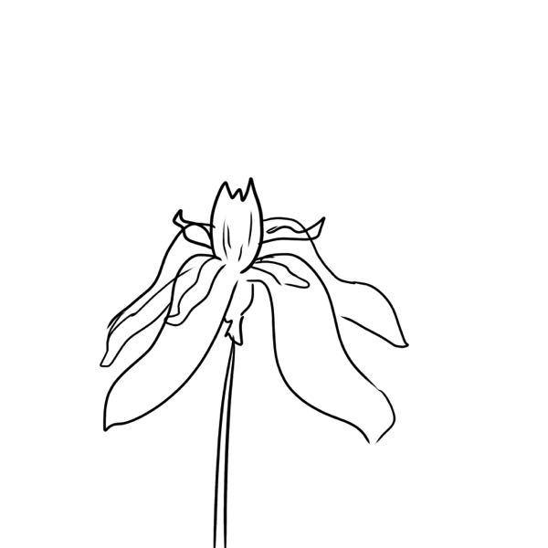 絵が下手で申し訳ないのですが、こんな感じの花の名前わかる方いませんか?