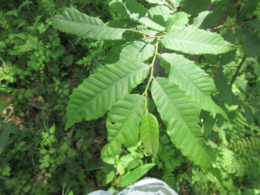 幼木の名前を教えて下さい。