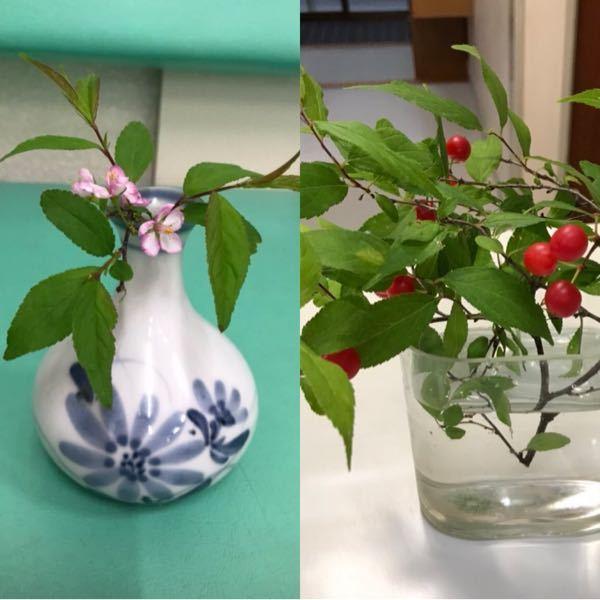 この植物の名前を知りたいのですが、調べても該当しそうなものが見当たりません。 どなたかご存知ないでしょうか。 4月ごろに花が咲き、6月に小さな赤い実がつきます。実は1センチくらいで、これ以上大きくはなりません。 もしご存知の方がいらっしゃったら教えていただけますと幸いです。