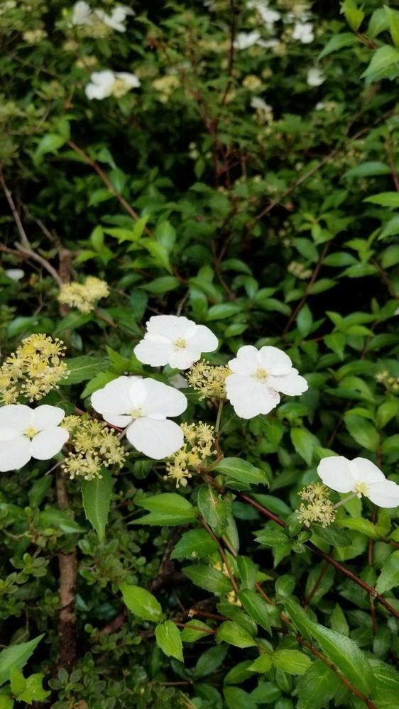 この花の名前を教えてもらえないでしょうか?
