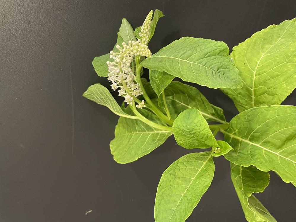 写真の植物の名前を教えてください。 よろしくお願いします。
