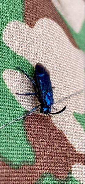 この虫なんですか? 2時間くらい一緒にいました 1センチちょっとです