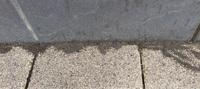 コンクリートの隙間からアリが出てきます。  解決策はありますか?