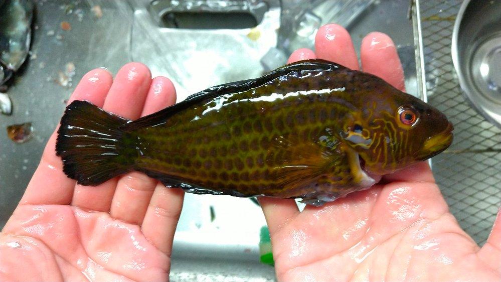 この魚の名前わかる方、教えてください。