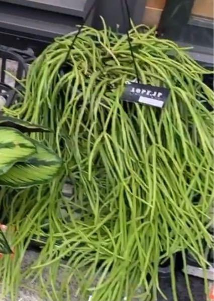 この植物は何という種類なのかお分かりな方いらっしゃいますでしょうか?