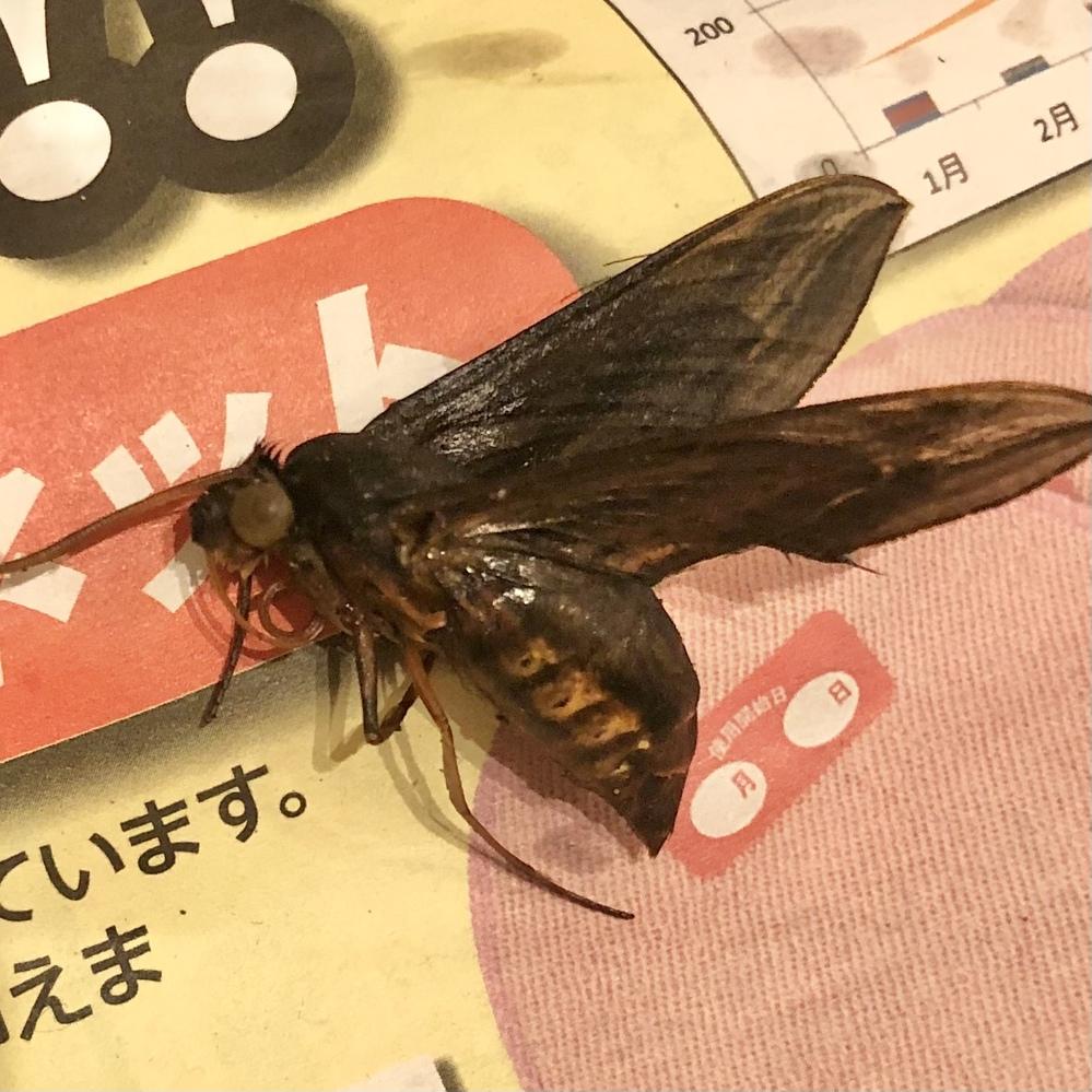 玄関にいました。蜂かと思って駆除しましたがよくみると違うような…こちらの虫の種類わかる方いたら教えてください(>_<)