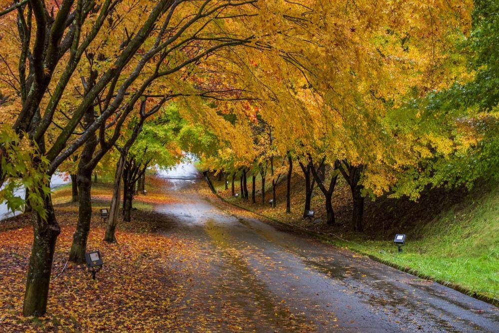 六月の長雨を「梅雨(つゆ)」と言いますが、これに対応する秋の長雨を指す語は何ですか? 「梅雨明け」は聞いても「秋雨(あきさめ)明け」は聞いたことがありません。
