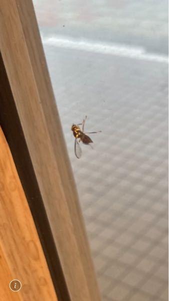 この虫は何という名前でしょうか?