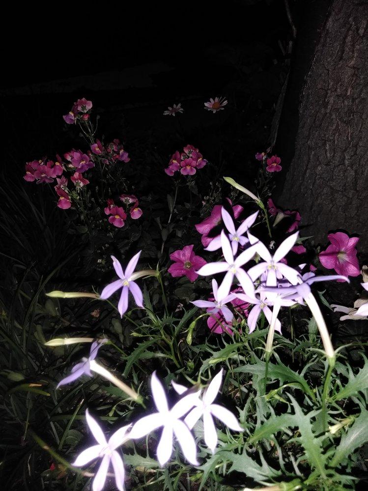 ここに映っている草花の名前を教えて下さい。お願いします。