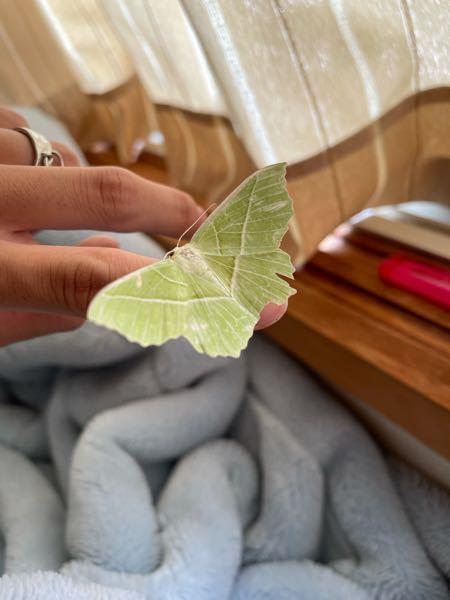 家で暴れ回ってたんですけど、この虫なんて名前ですか?