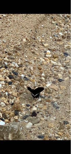 これは何という名前の蝶ですか? 黒い羽に白い模様と若干オレンジの模様が入っています。 沖縄県南部で撮影しました。