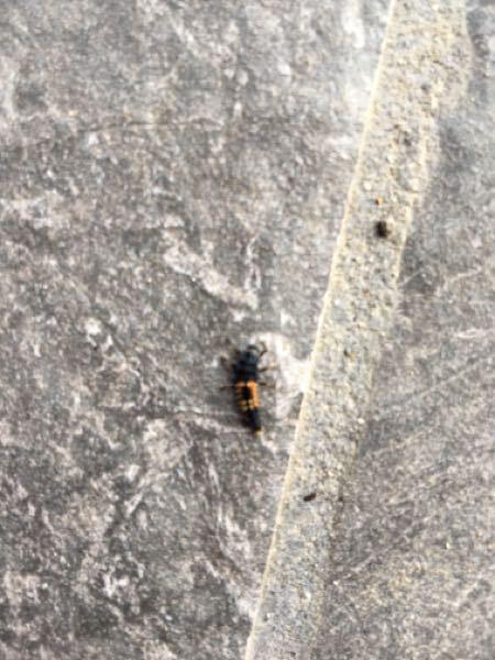 この変な虫はなんでしょうか?毒々しい色で気持ち悪いです。