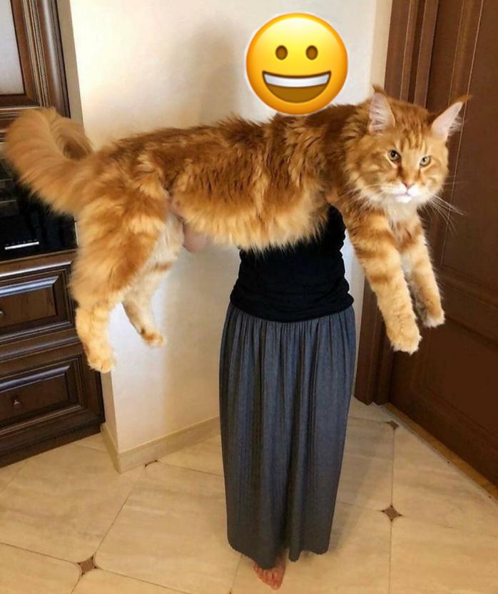わたしの猫です。可愛いですか?