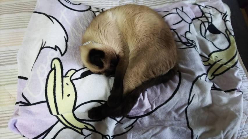 このにゃんこの寝姿を見てどう思いますか