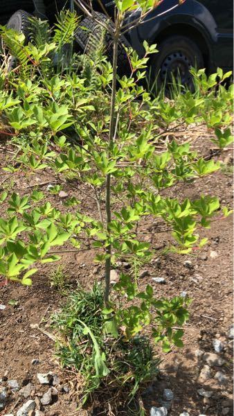 この木の種類を教えてください プレゼントされましたが種類がわからなくなりました わかるからよろしくお願いします
