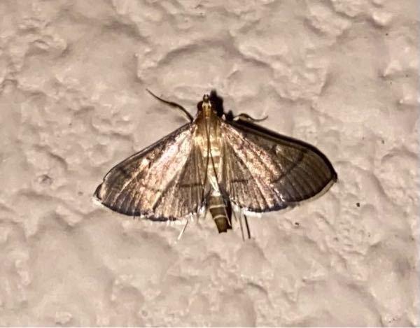 何という蛾でしょうか