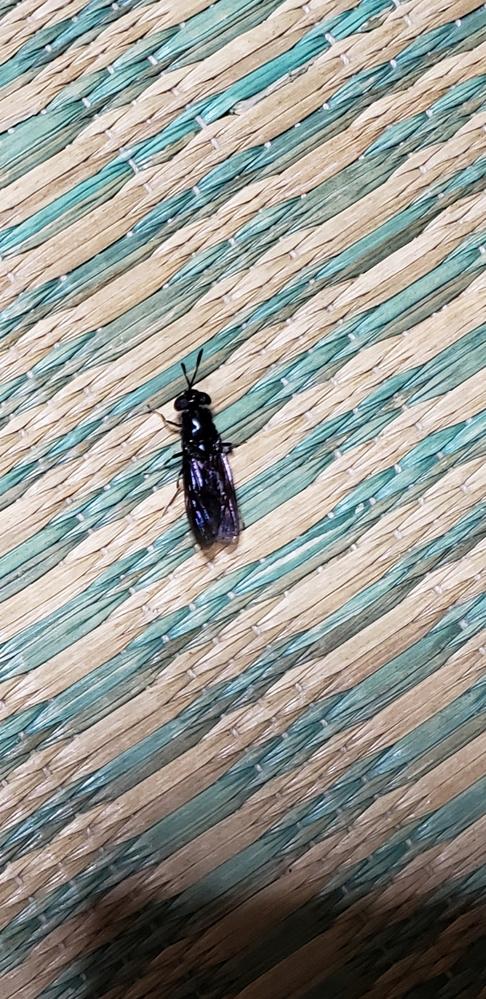 こんにちは! これは何の虫でしょうか?夏になるとよくいます。 分かられる方、宜しくお願い致します。