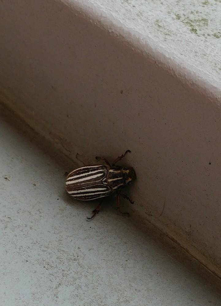 この虫はなんていう虫ですか?