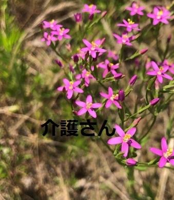 この花の名前は何ですか? 撮影日は2021年6月19日で撮影場所は兵庫県です。 よろしくお願いします。