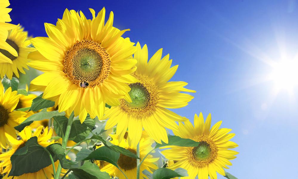 夏の花 なに好きカ❓