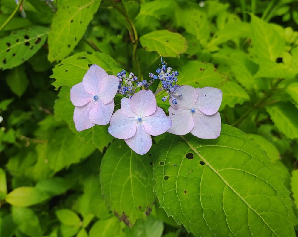 この花がつく植物の名前を教えてください。 よろしくおねがいします。 今日、北河の斜面に多くありました。