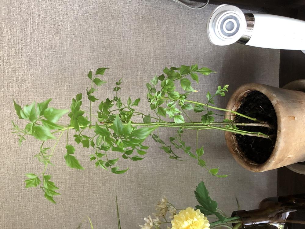 この観葉植物の名前がわかる方、教えてください!