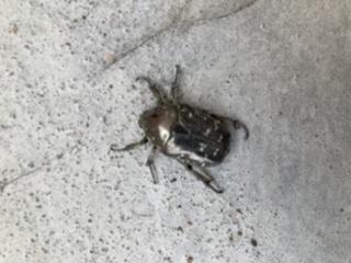 この虫、知ってる方 教えてください。