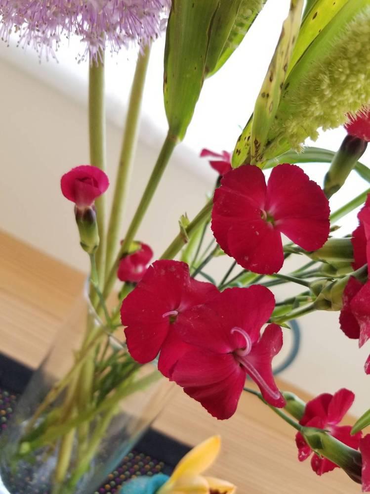 代理質問です この花の名前と品種・・・そもそも私は花の名前と品種と言うのが同じなのか別なのかさえわかってないくらい無知でして 画像検索してもわかりませんでした 大きさは親指と人差指で輪っかを作ったものより少し小さいらしいです どなたか教えていただけないでしょうか?