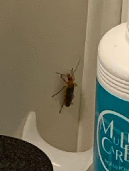 これなんて虫か教えてください、、