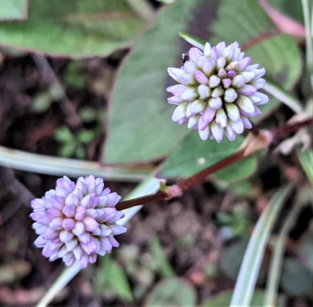 この花の名前教えて下さい2