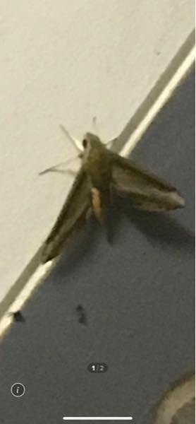 この虫は何という名前でしょうか? 大きくてびっくりしてます。