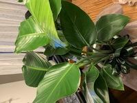 誕生日プレゼントで主人から貰いましたが、何の植物か忘れたみたいです笑 わかる方宜しくお願いします!