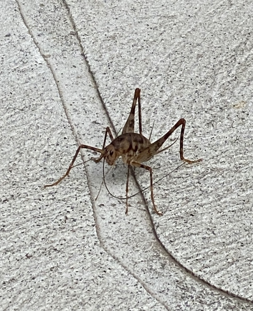 この虫の種類を教えてください。