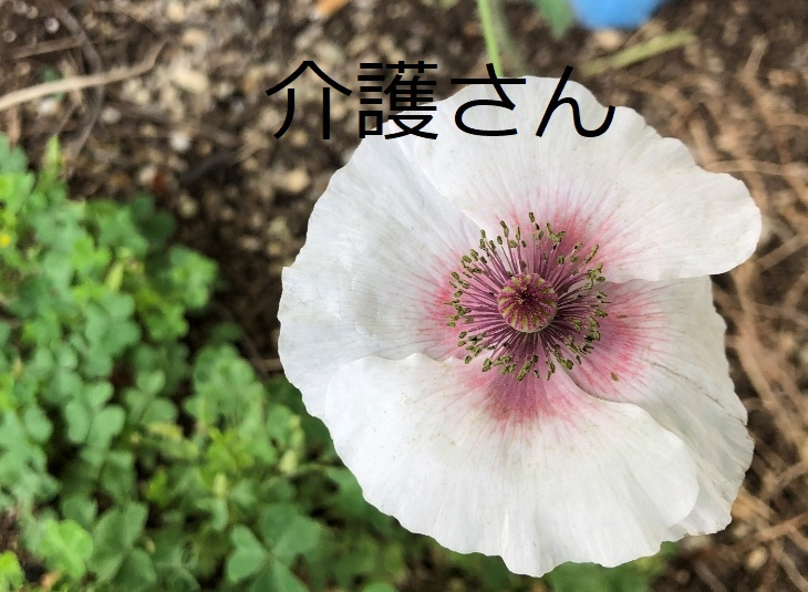 この花の名前は何ですか? 撮影日は2021年6月21日で撮影場所は兵庫県です。 よろしくお願いします。