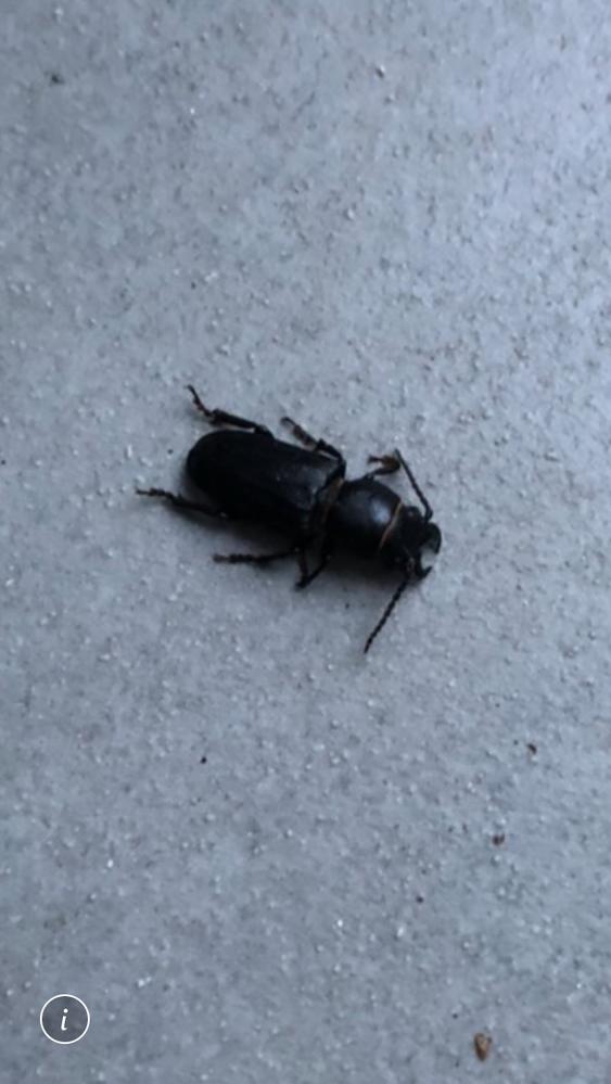 この虫の名前を教えて下さい!