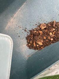 野菜を収穫してしばらく置いていた土の中に赤い小さいムカデみたいな虫が沢山いました。ムカデでしょうか??