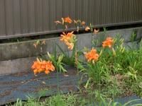 オレンジ色の花が咲いています。名前などご存じの方は教えて下さい。