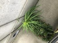 この植物は雑草でしょうか??
