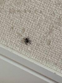 至急です!この蜘蛛は害はありますか?牙を動かしていて怖いです。