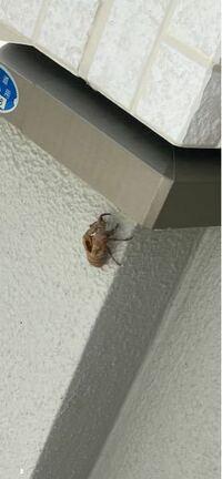 自宅の外壁に、、セミの抜け殻ですか? 何が生まれたかわかる方いますか?