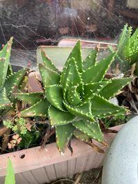 この植物の名前や品種等の情報を教えて下さい。