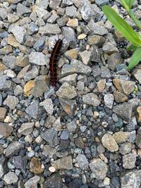 これはなんの幼虫でしょうか? 大量発生しています。