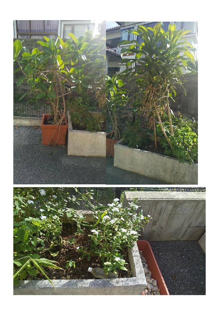 画像の植物3つの名前を教えてほしいです。