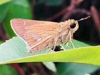 この昆虫の名前が知りたいです。 よろしくお願い致します☆