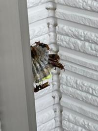 蜂が巣を作っているのでしょうか? ベランダで見つけました。  もし蜂の巣であれば、何蜂でしょうか? 市販の殺虫剤で駆除できるレベルでしょうか?