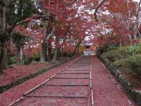 京都クイズ TV/CMで ウイッグ YUKI のロケ地は何処でしょうか? https://www.youtube.com/watch?v=UcaSxjIhhGI 冒頭 女優/山本陽子が横向正座してバックが真っ赤なモミジの景色の場所が分かりません。あんな場所京都にあるのか? 合成偽造画像ではないか?  ・階段でモミジは・・京都山科 毘沙門堂 ・手水鉢にモミジ・・京都左京区 圓光寺
