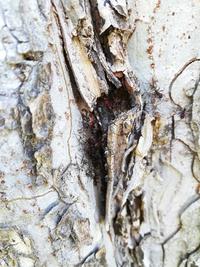 近所の公園の木にいた虫です。なんて虫ですか?? 蟻みたいな蜘蛛みたいな形で木の皮の中に密集してました。