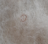 敷き布団の綿の中にあったモノですが虫でしょうか?枯れてました。