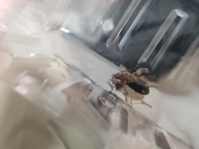 この虫は害虫ですか?